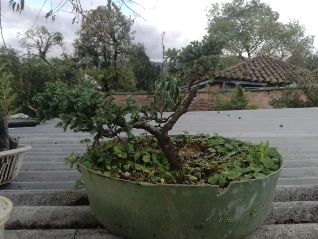 AYUDA CONSEJOS Planta12