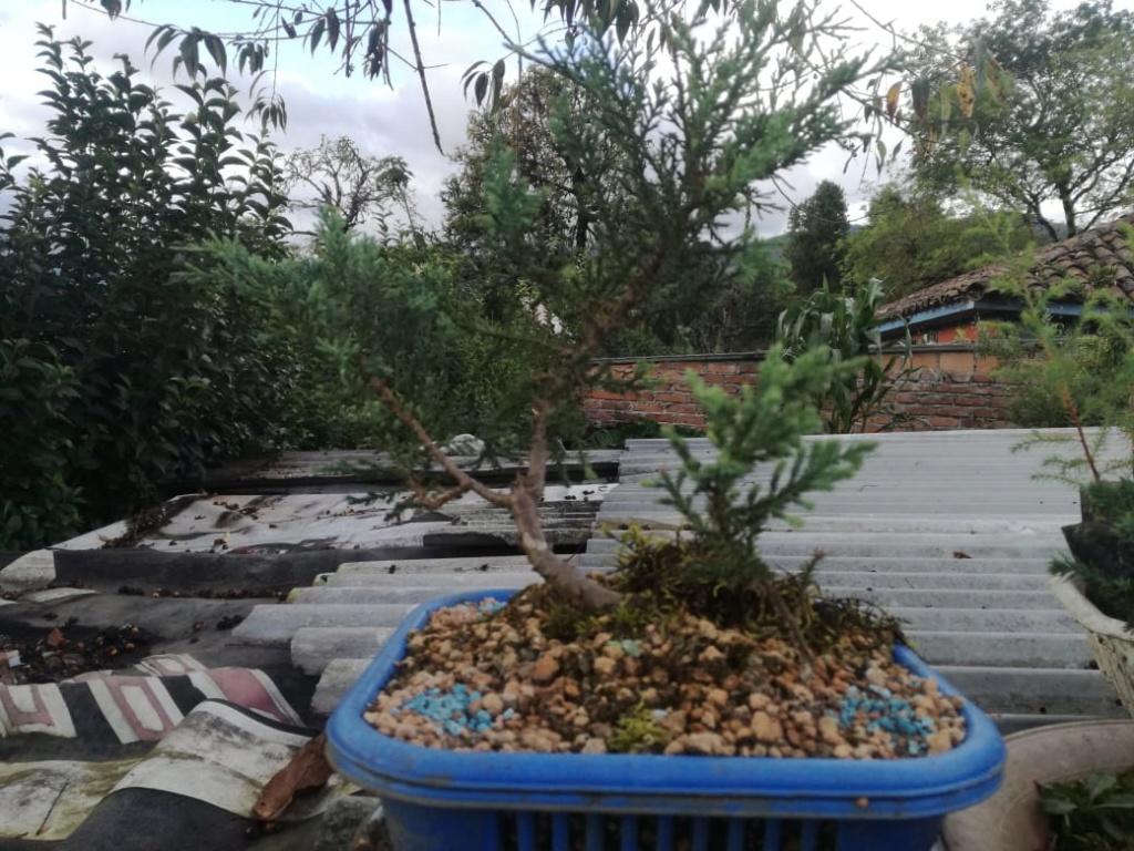 AYUDA CONSEJOS 2 Planta13