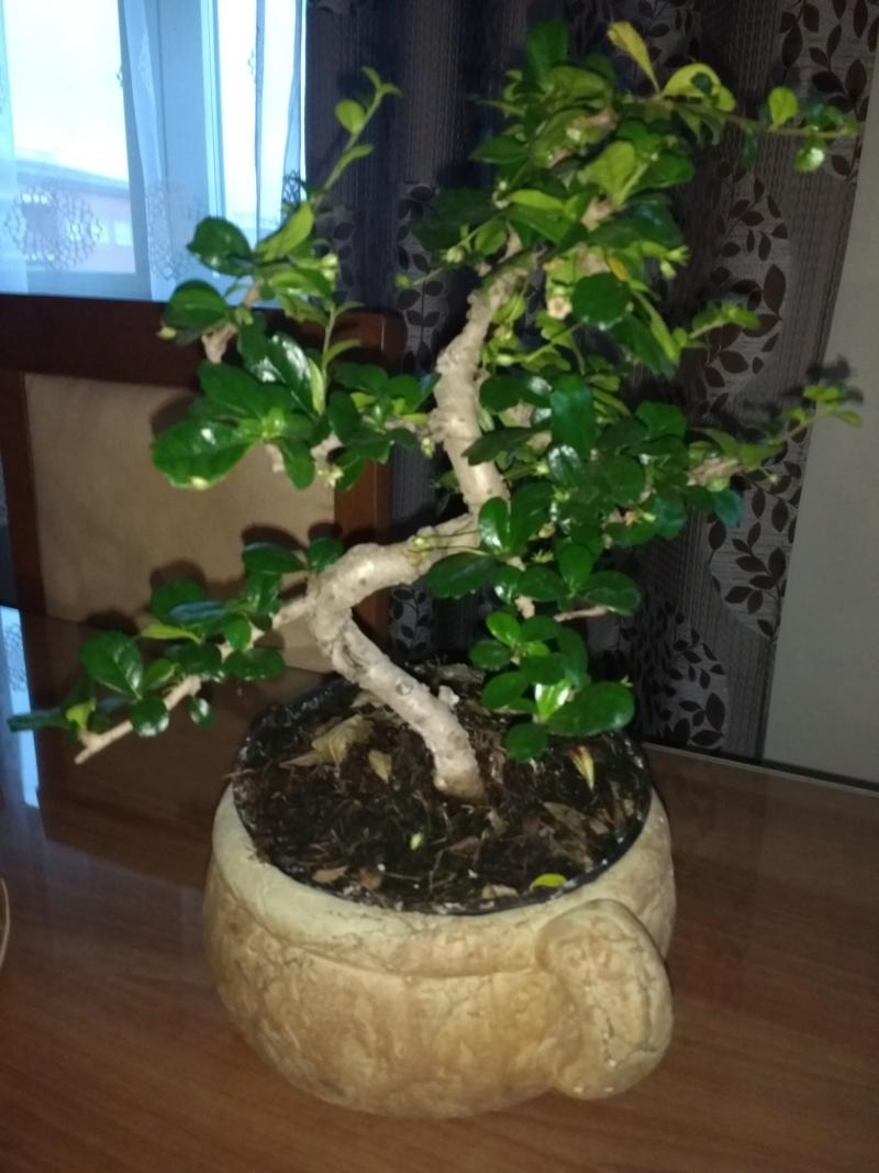 Nueva en esto de los bonsais Img_2012