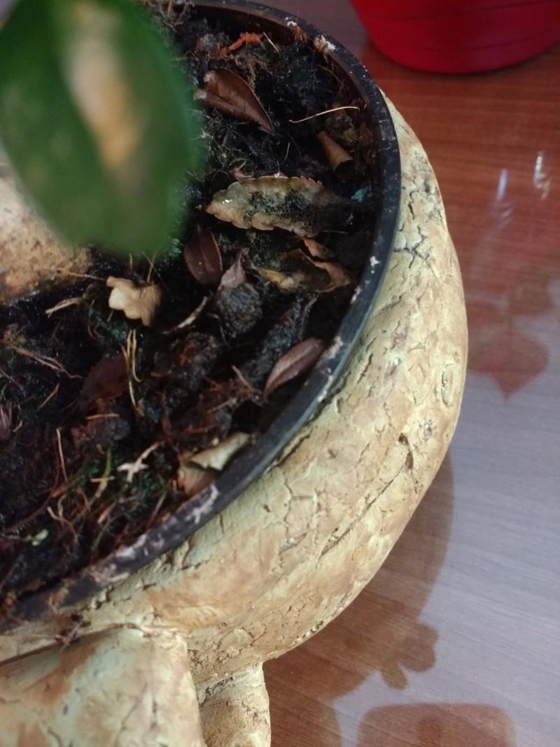 Nueva en esto de los bonsais Img_2014