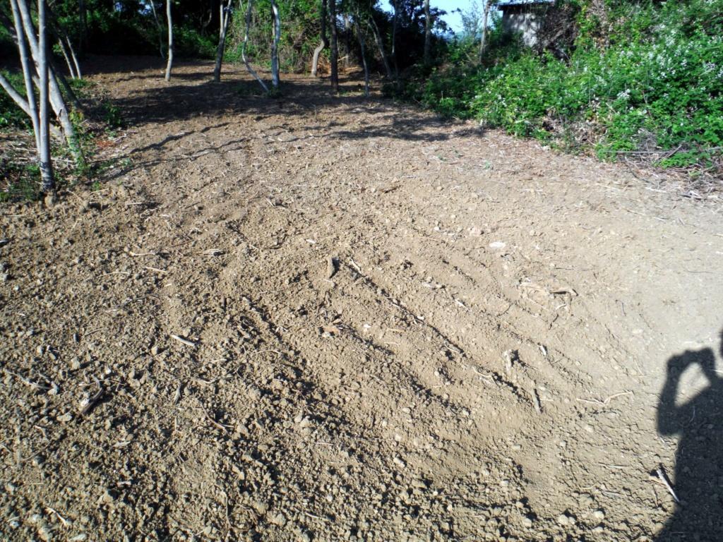 recupero terreno agricolo : arare, zappare o che altro e con quale attrezzo? Dscf0910