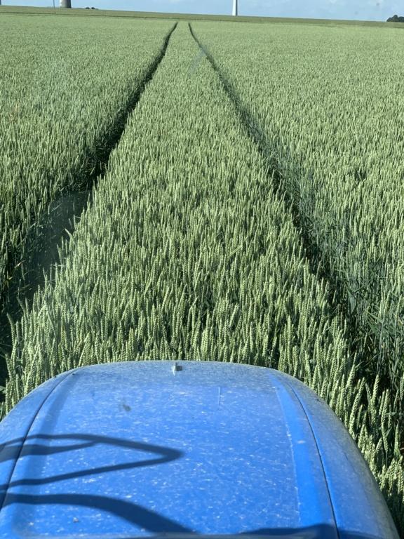 Suivi des blés 2020 - Page 21 02415310