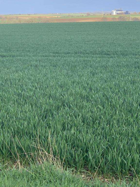 suivi blé 2021 - Page 5 Bf419610