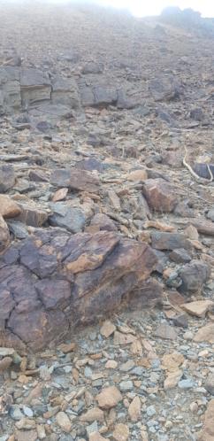 صخرة على شكل جمل بارك ودجاجة وسلحفاة وثعبان  Eeeeeo11