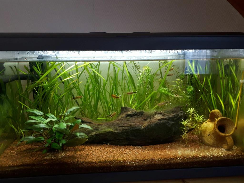 Des nouvelles de mon aquarium de 60L et partage de ma petite expérience 16605510