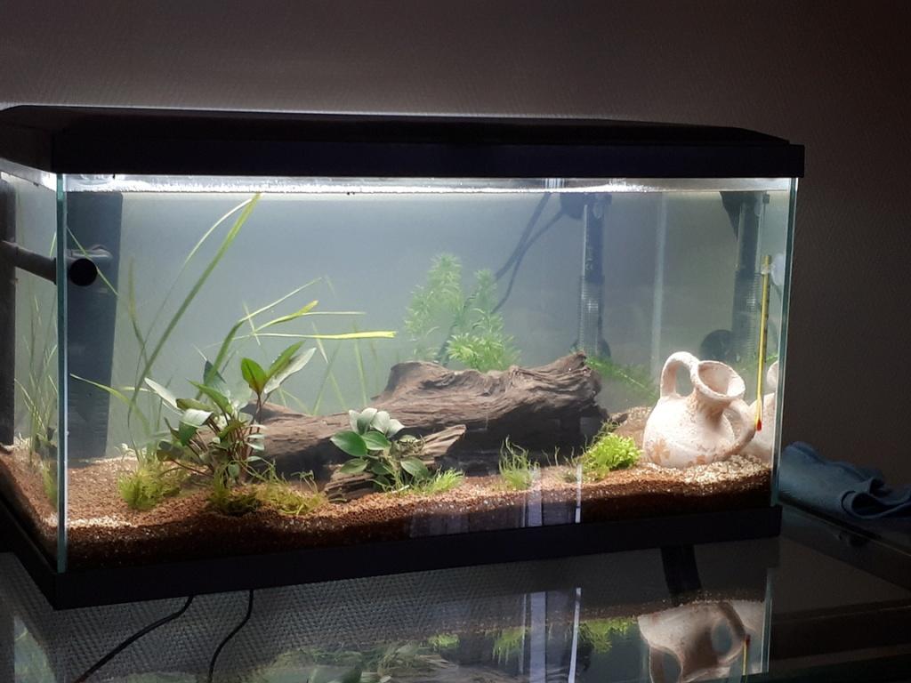Des nouvelles de mon aquarium de 60L et partage de ma petite expérience 21-10-11