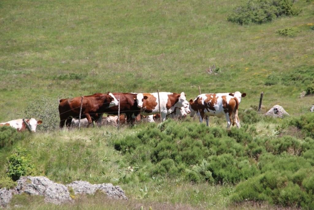 [63] Les 15 ans du club en Auvergne - 20 et 21 juin 2015 Img_9045