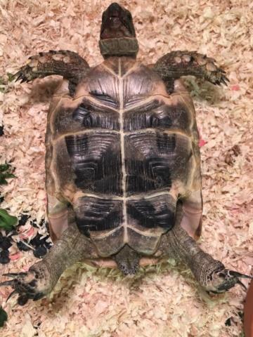 Identification tortue  B00b6a10
