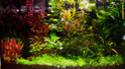 Présentation Aquari10