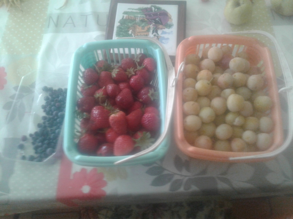 recolte fruits 2021 20210811