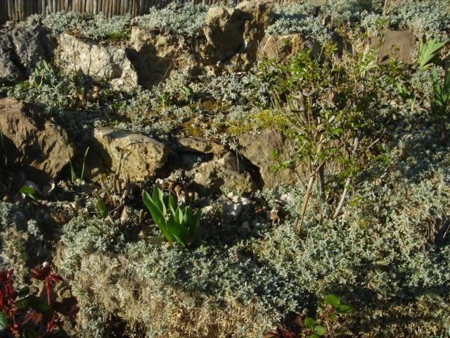 Ma rocaille Dsc01813