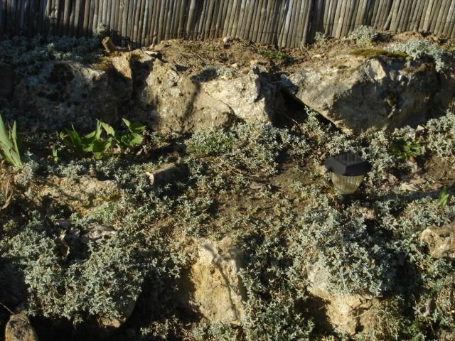 Ma rocaille Dsc01814