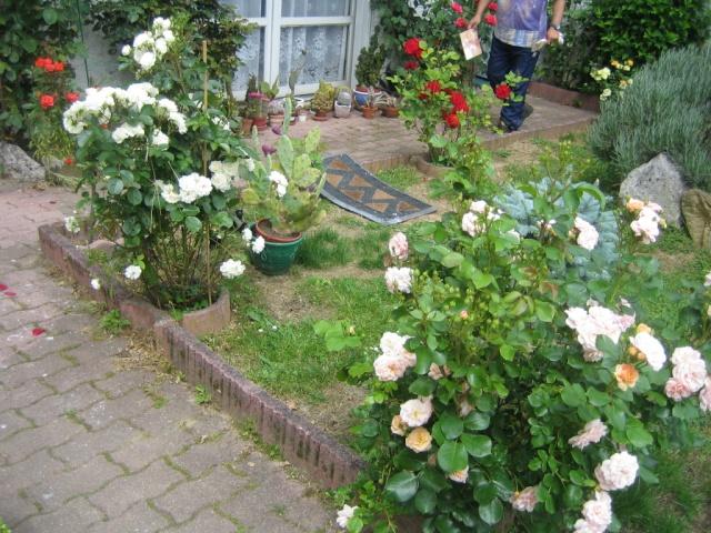 Quelques unes de mes roses ... Img_1814