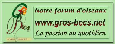 Perroquets et Gros becs Grosbe10