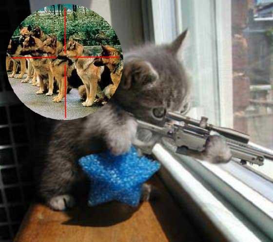 Insolite (tous thème ) Sniper10