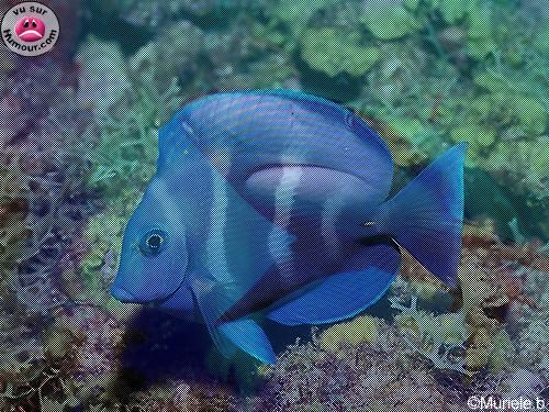 Quel beau poisson ! Illusi10