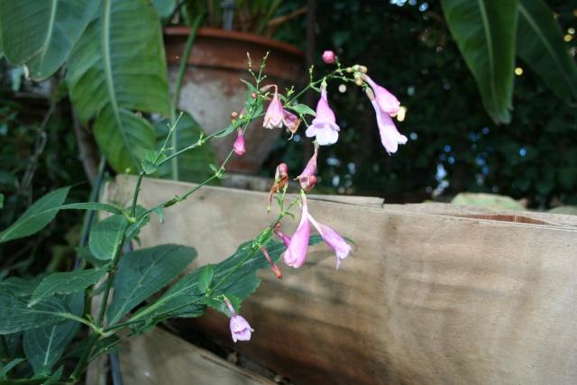 Quelques fleurs après la pluie Difflu10