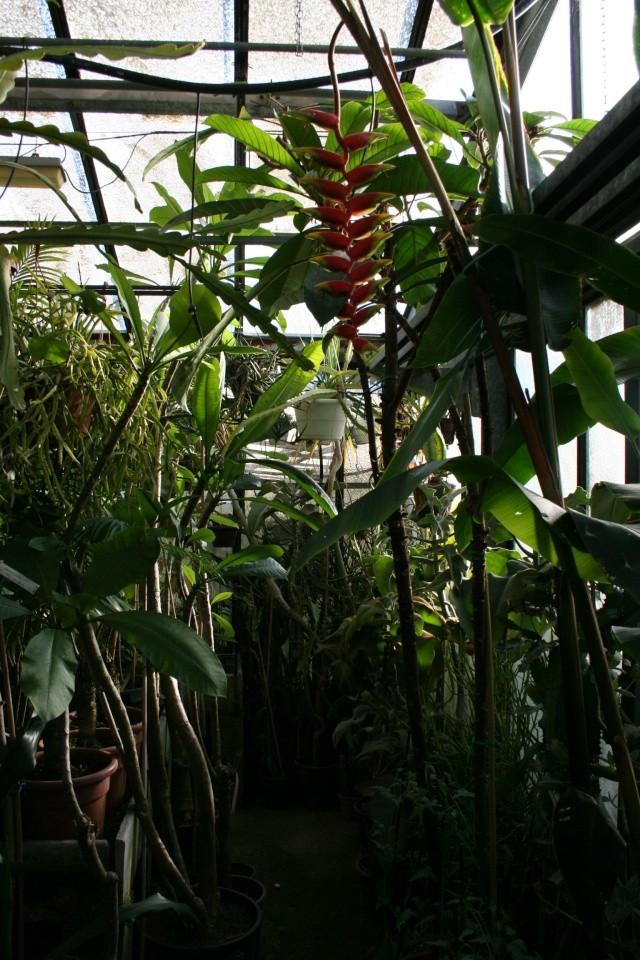 La Serre tropicale du Parc Phoenix de Nice Helico10