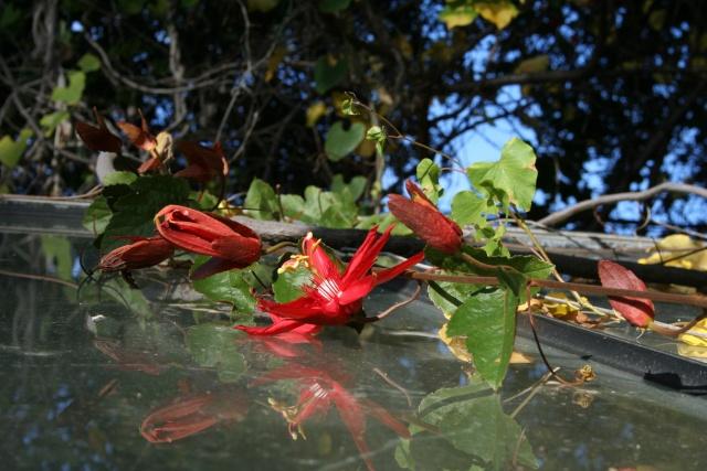 Quelques fleurs après la pluie Passif10