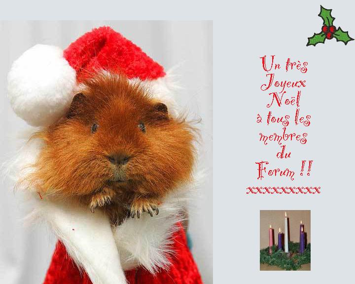 Joyeux Noël à tous et à toutes ! Joyeux12