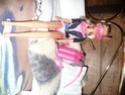 [BARBIE] Une partie de mes Barbies p1 et surtout mes CHEVAUX ! Premia12