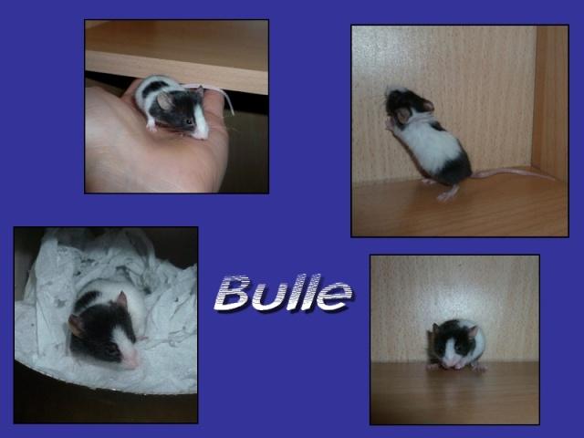 bulle11.jpg