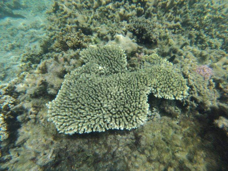 Fond marin La Réunion (polo44) Gopr0211