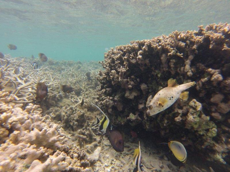 Fond marin La Réunion (polo44) Gopr0213