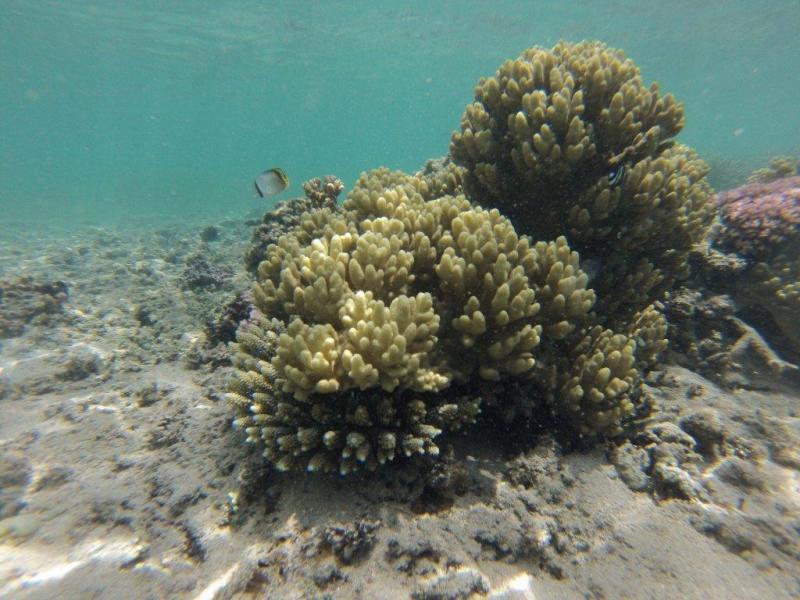 Fond marin La Réunion (polo44) Gopr0217