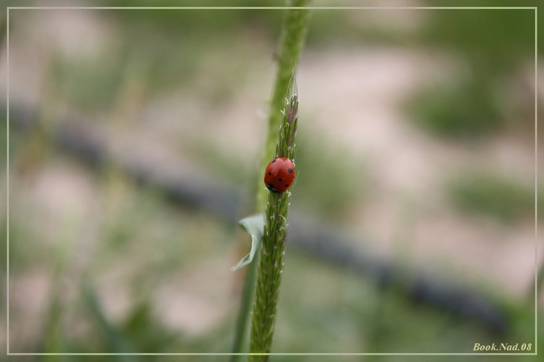 Coccinelle. Img_8512