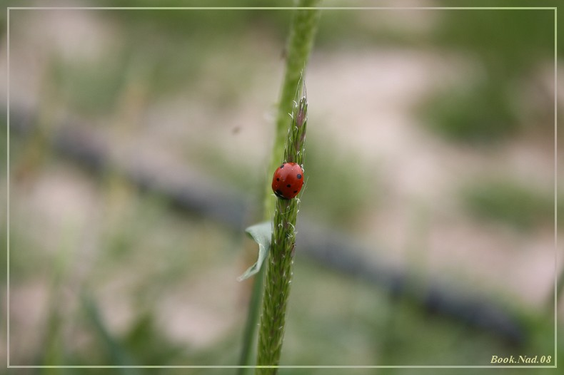 Coccinelle. Img_8514