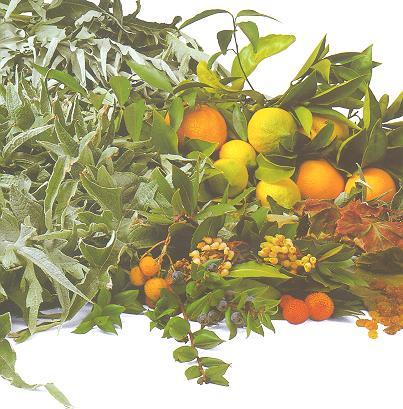 Les fruits et les légumes. - Page 2 Yhtgig10