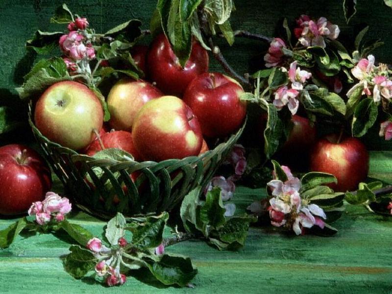 Les fruits et les légumes. - Page 2 Z81po310
