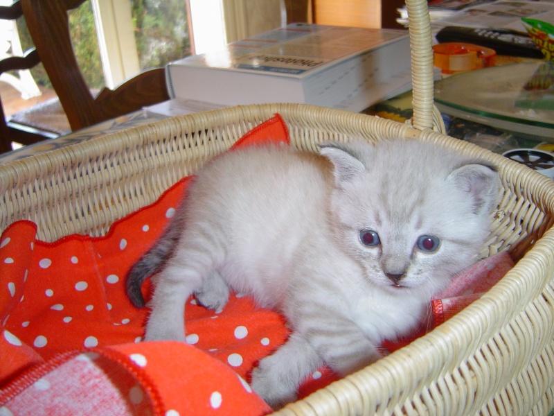 Nos amis les bêtes : Chien&Chat - Portail Dsc03315
