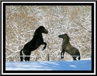Les chevaux et les merveilleuses photo de Léo au pays des merveilles 55673210