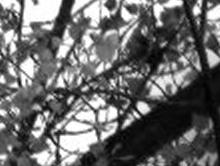 Caméra CCD DFK  de Imaging Source Captur18