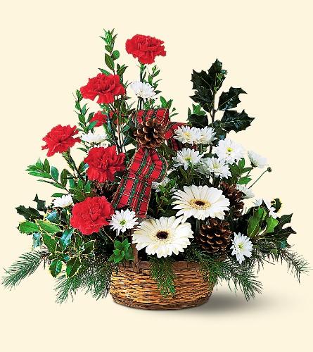 Noel fleurs Gene Eternal Valley 3464610