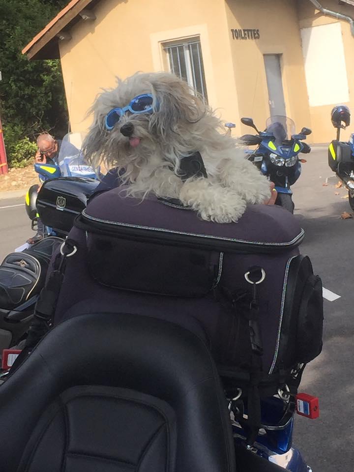 Sécurité routière avec Max interpellé mais toujours un chien libre !!! 43201710