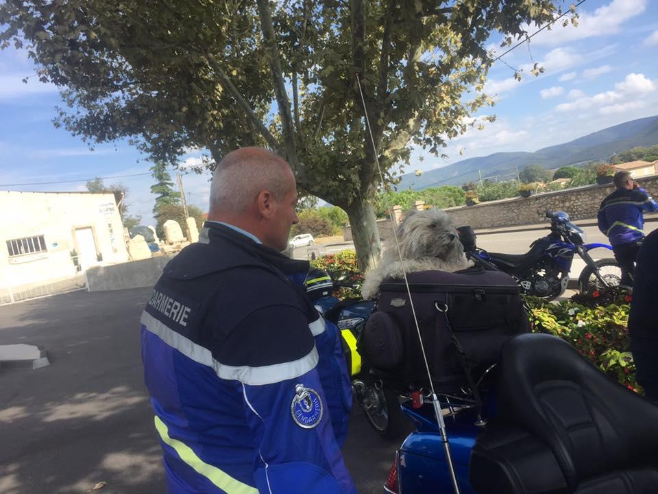 Sécurité routière avec Max interpellé mais toujours un chien libre !!! 43273210