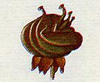 Reine des Prés, Filipendula ulmaria Fruitr10
