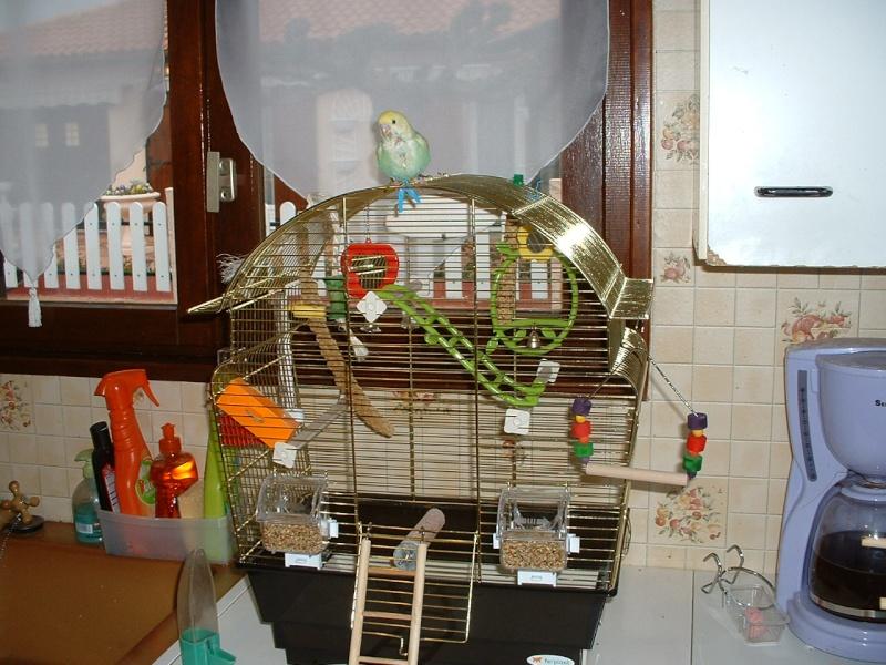 ma nouvelle cage Dscf0032