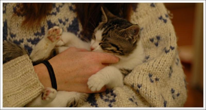Aribo petit chaton de 4 mois tigré et blanc Calinh10