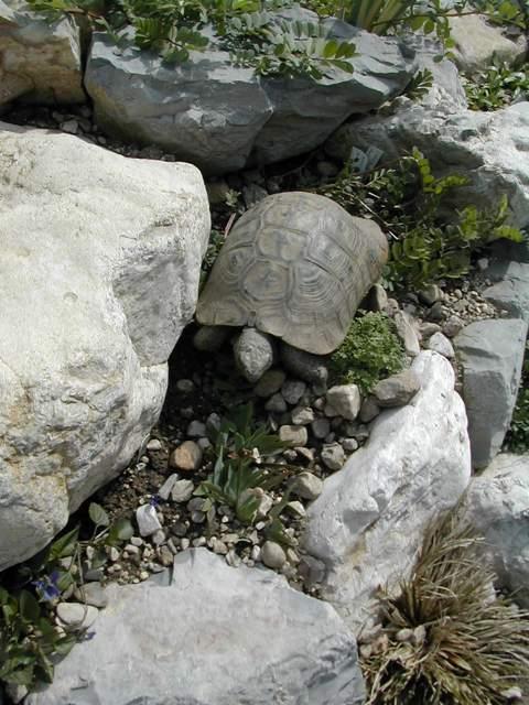 Faire une rocaille. Dscn6013