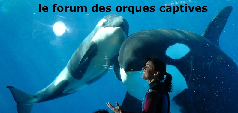 orques captives