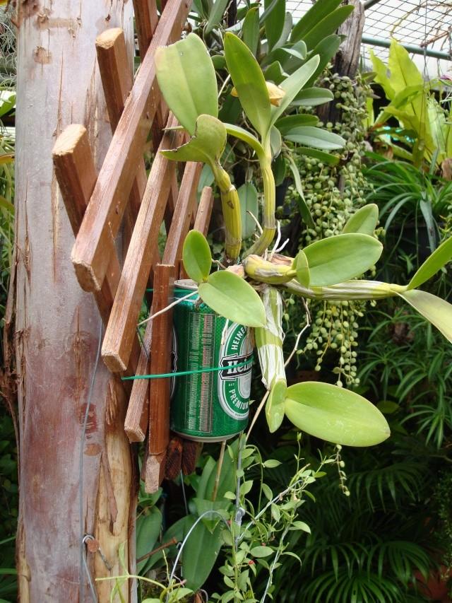 vive les escargots et la biere Dsc01011