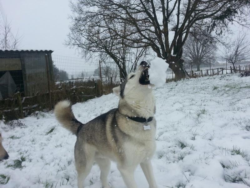 Dans la neige...  77480311