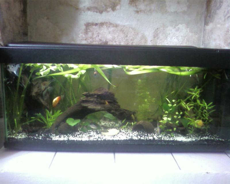 vend tout aquarium et matériel aquariophile Photo020