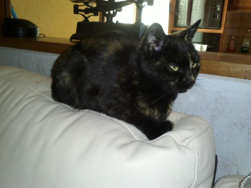 Ce chat me cherche... Img10810