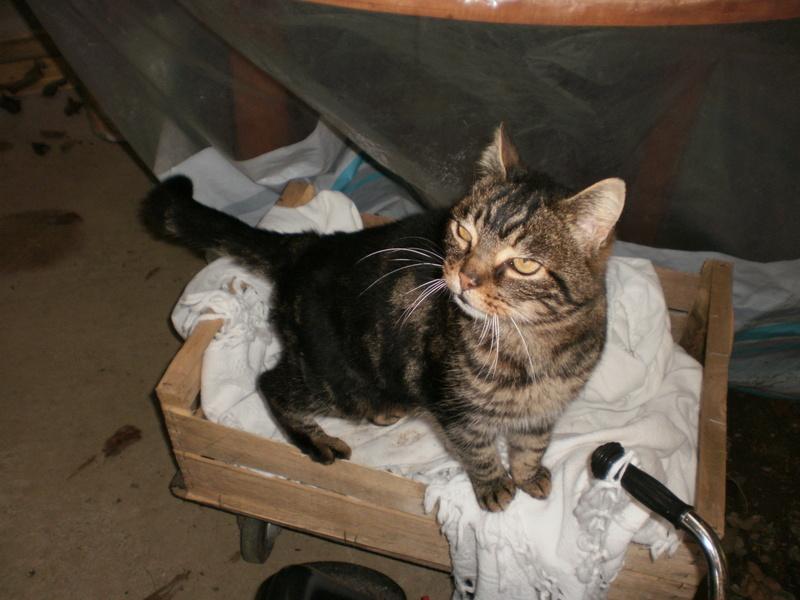 Ce chat me cherche... P1180010
