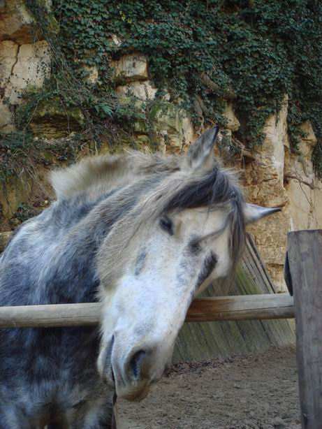 CHEVAUX Resize23